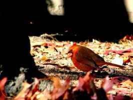 Cardinal desires. by Littography