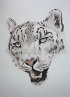 Snow Leopard Wip by DragonsDust