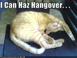 lolcat hangover - version 1 by YuuShindemura