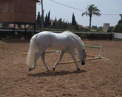 Andalusian Stallion16 - Stock by Bolero-L