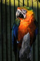 Catalina Macaw by teslaextreme