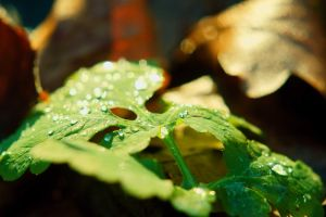 The morning dew by PhotoDragonBird