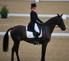 Dressage 28 by equinestudios