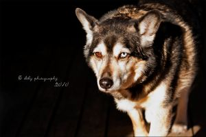 Little Wolf by ILTBY