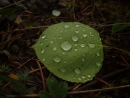 Raindrop Collection by Styx958