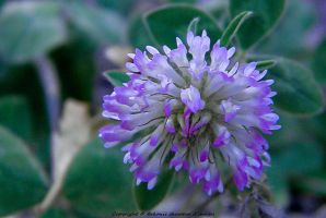 Flore (52) by Arkonis