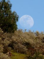 Foothills Moonrise by Geotripper