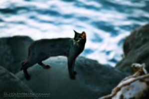 The Black Cat by ScarFoo