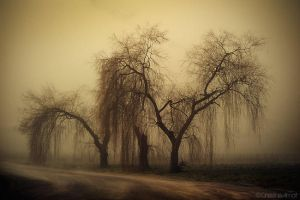 When the trees are crying by ChristineAmat