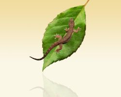 Lizard and leaf by tompot
