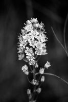 Death Camas by TheWanderer2030