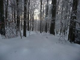 winterforest VI by mimose-stock