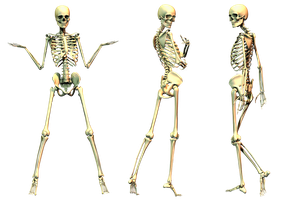 Spooky Skeleton 01 PNG Stock by Roys-Art