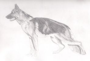 Dog Study by Timsmasher