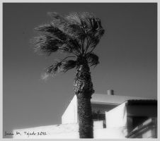 Windy morning by quevedo3