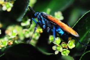 A Bugs Life by SharPhotography