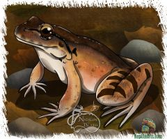 Mountain Chicken Frog by NadilynBeato