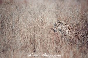 Leopard by victoriahopkinson