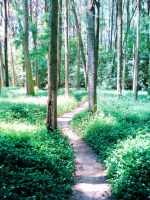 The path in the forest by Filianthur