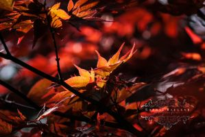 Indian Summer by Sophie-Wieland