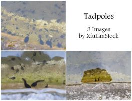 Tadpoles by XiuLanStock by XiuLanStock