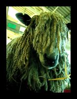 dreadlock sheep by damo3sp