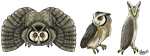 White-faced Scops-Owl by SageKorppi
