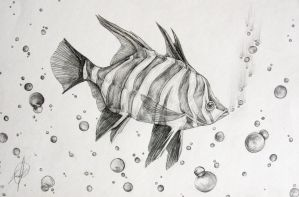 Fishie with Bubbles by Michelle-Kowalczyk