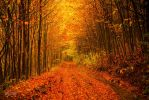 Walk through the autumn forest by valiunic