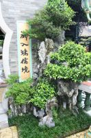 China - Plants and Sign by kingmancheng