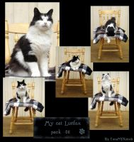 My cat Lurifax, pack 06 by LunaNYXstock