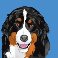 Bernese Mountain Dog by Spanner90