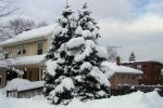 Snow Covered Tree by Lust0fADeeperPain