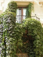 Ivy balcony by Adaae-stock