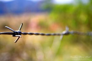 Barbed wire 1 by pixellorac