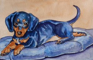 Dempsy the Dachshund by Theriona