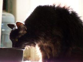 Take A Sip Old Kitty by anniemae04