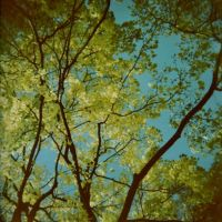 Holga up in the Tree by Lomomaniac
