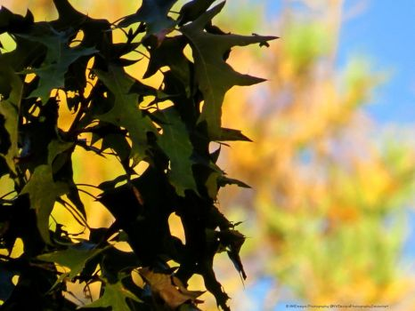 OakLeaves-AWD by AWDesignsPhotography