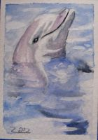 dolphin atc by nupharHALL