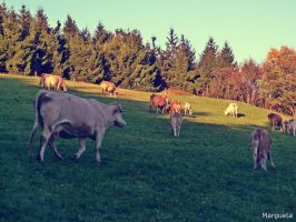 Countryside moments by margueta