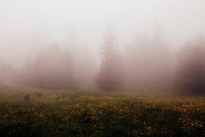 Fog again by Shreever