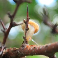 Orchard Snail by buzadam