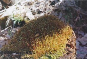 moss rock by thePARANOIDghost