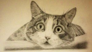 Pencil cat drawing (Look into my eyes). by Ned-The-Hat
