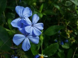 Blue Flowers by Matthew-Beziat