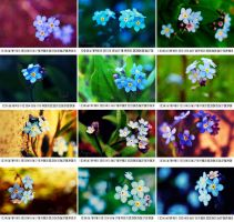 forget me not 2010 calendar by magnesina