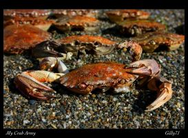 My Crab Army by Gilly71