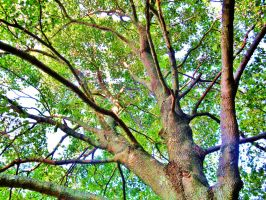 Tree by jutto