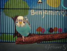 My budgie :) by angel6902